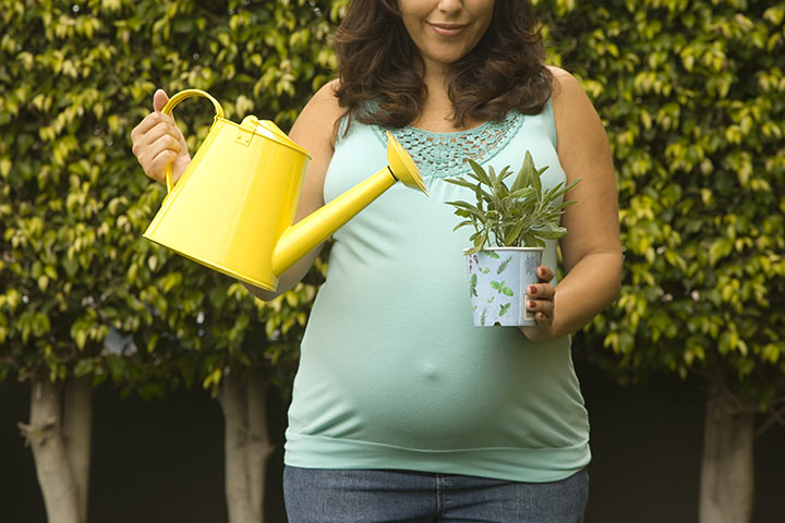 Gardening During Pregnancy