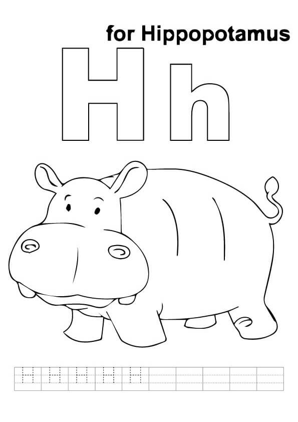 H-For-Hippo