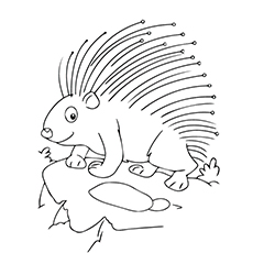 top 10 free printable porcupine coloring pages online
