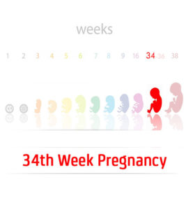 34th Week Pregnancy