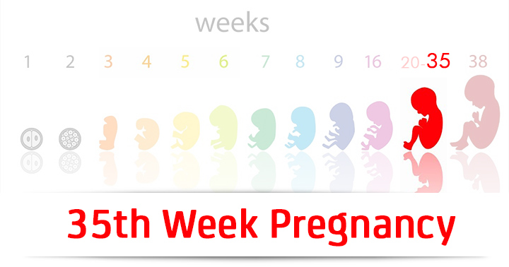 35th-Week-Pregnancy