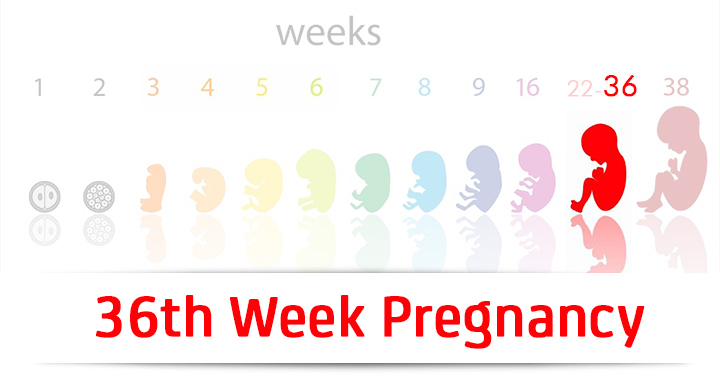 36th Week Pregnancy