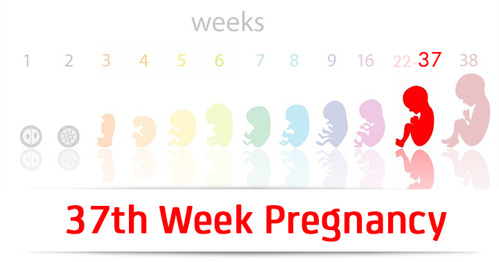 37th Week Pregnancy