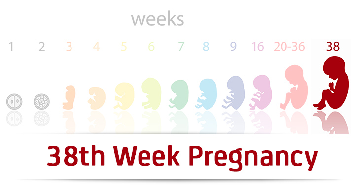 38th Week Pregnancy