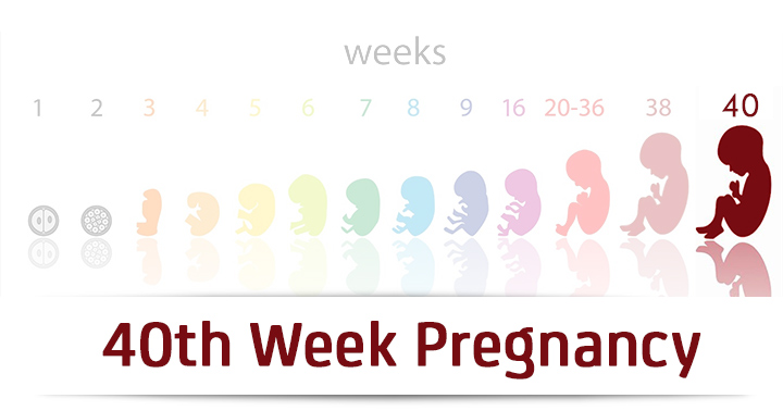 40th Week Pregnancy