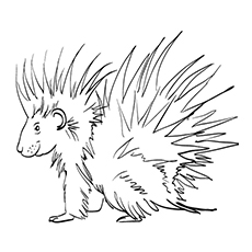 The Friendly Porcupine