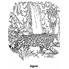 Best Free Printable Jaguar Coloring Pages Online