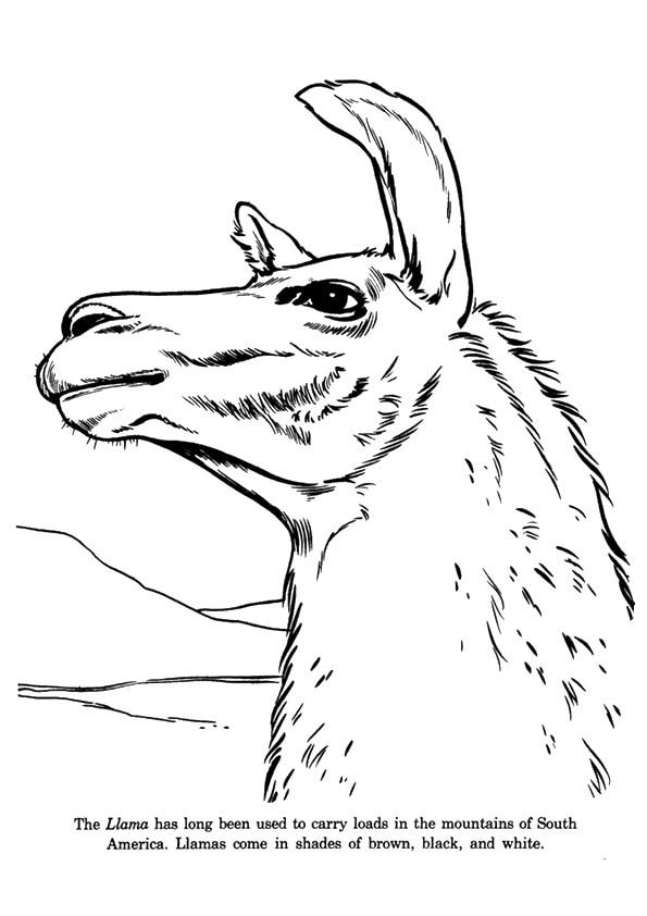 A-Pensive-Llama