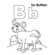 B For Buffalo