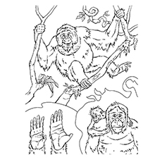 10 ticks calculator coloring book pages | 10 Free Printable Lovely Chimpanzee Coloring Pages Online
