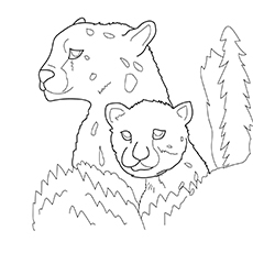 Jaguar With Her Cub