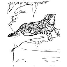 10 Best Free Printable Jaguar Coloring Pages Online