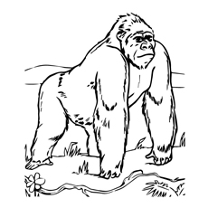 Majestic Gorilla Coloring Sheet