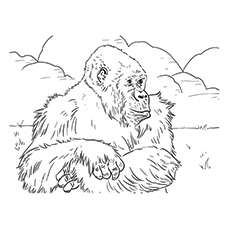 Coloring Sheet Of Mountain Gorilla