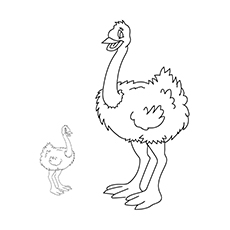 Ostrich Coloring Images
