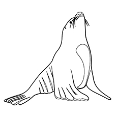 Sea Lion Seal Coloring Pages