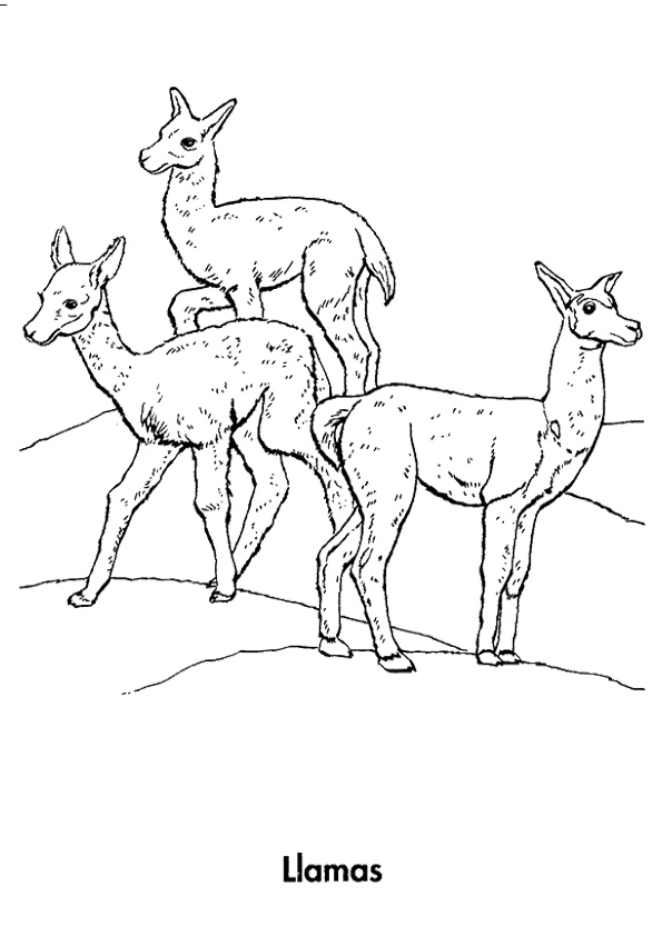Three-Llamas