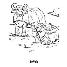 baby buffalo coloring pages | Top 10 Free Printable Buffalo Coloring Pages Online