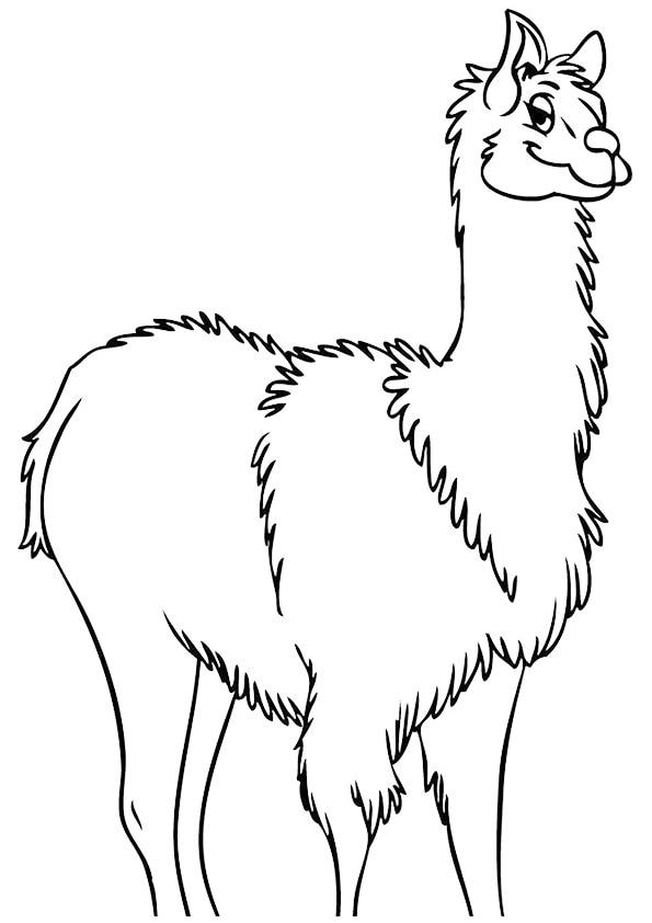 Wooly-Llama