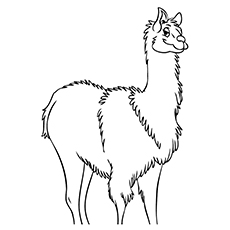 10 Cute Free Printable Llama Coloring Pages Online