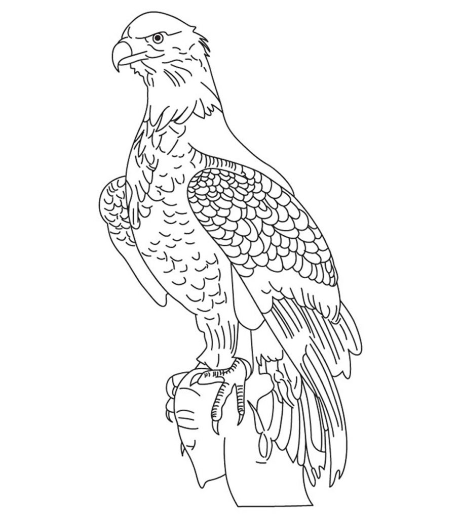 20 Cute Eagle Coloring Pages For Your Little Ones - photo#6