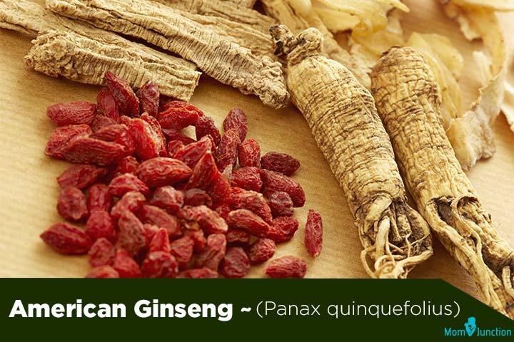 American Ginseng (Panax quinquefolius) (1)