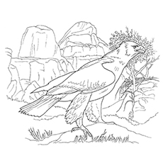 Coloring Page of Bald Eagle