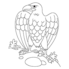 Coloring Page of Black Eagle