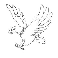 Booted Eagle 17