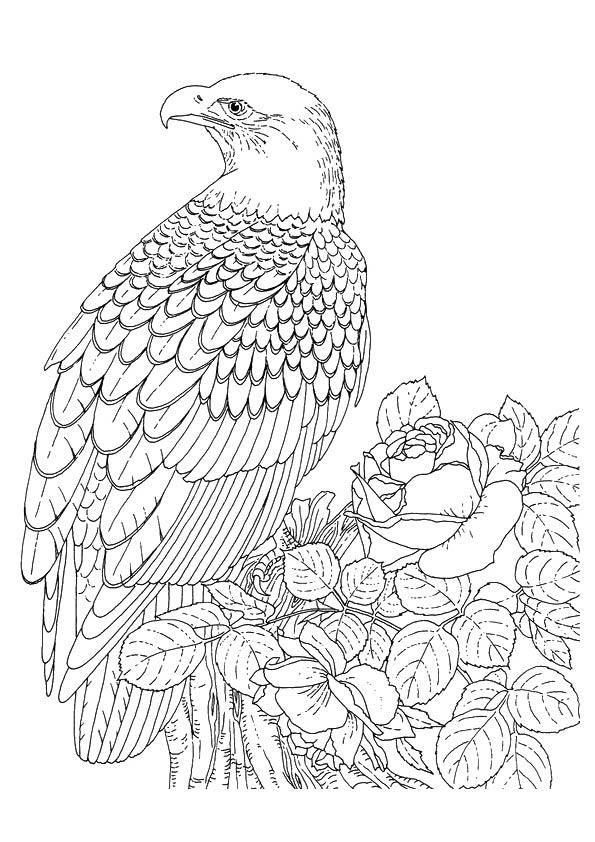 Crescent-Serpent-Eagle