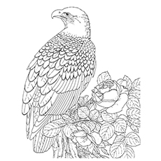 Coloring Page of Crescent Serpent Eagle to Print