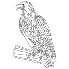 Golden Eagle Coloring Sheet To Print
