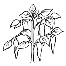 Pepper Coloring Page - Guernica Pepper Plant