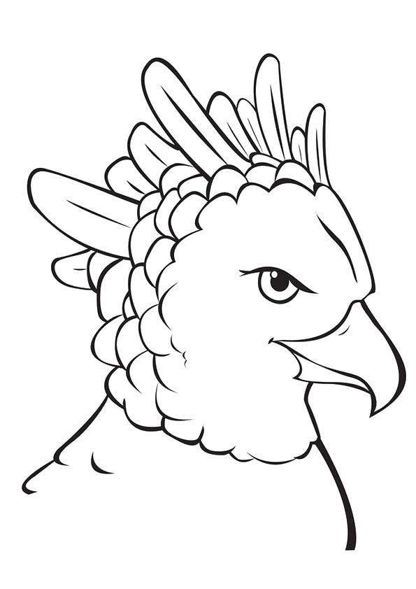 Harpy-Eagle