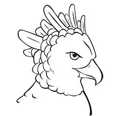 Beautiful Harpy Eagle Coloring Page