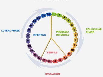 Luteal Phase: What Is It And How Is It Related To Pregnancy?