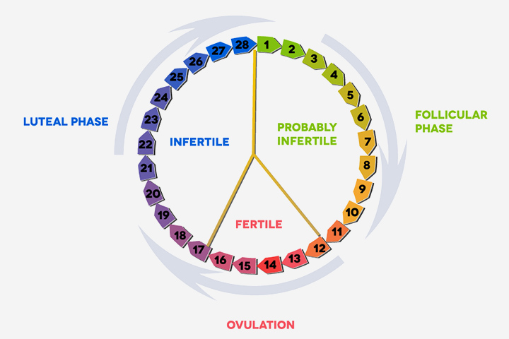 Luteal Phase What Is It And How Is It Related To Pregnancy