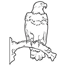 Martial Eagle Pic To Color