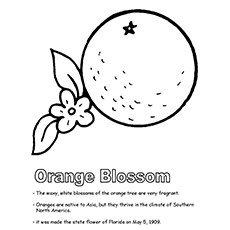 Orange Blossom Coloring Sheet to Print