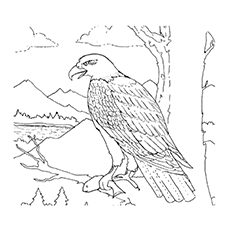 Coloring Pages Of Philippine Eagle