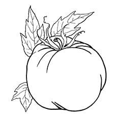 Tomato Coloring Page - Ripened Tomato