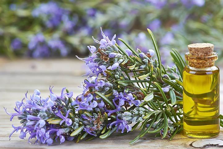 Rosemary Oil During Pregnancy