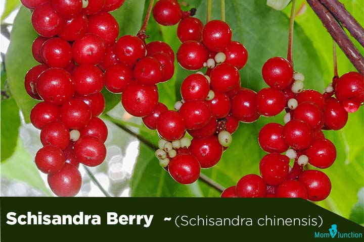 Schisandra Berry (Schisandra chinensis)
