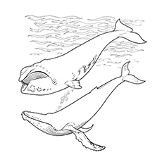 whale coloring pages short finned pilot whale - Whale Coloring Page