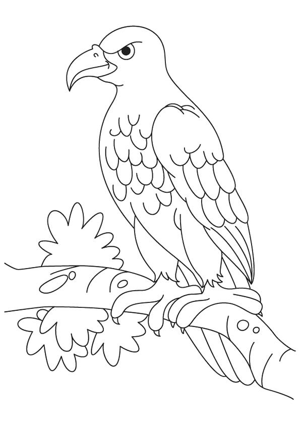 Steller%E2%80%99s-Sea-Eagle