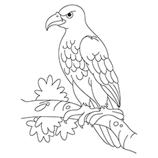 Colorign Page of Steller's Sea Eagle