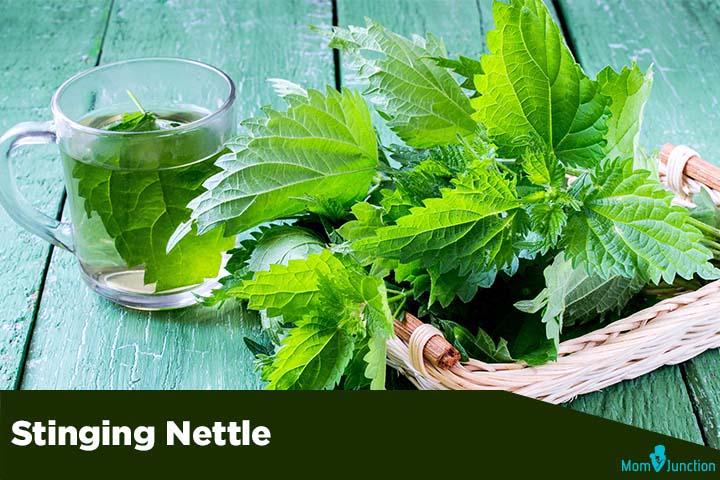 Stinging-Nettle