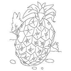 Pineapple Coloring Page - Sugarloaf Pineapple