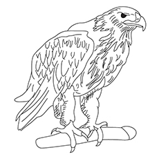 Free Printable Coloring Pages of Tawny Eagle