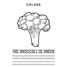 Broccoli Coloring Page - The Broccoli Is Green